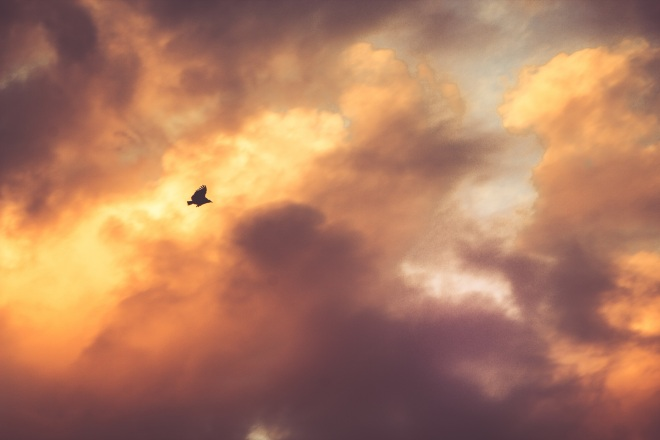 Bird dark light sky